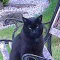 Black The Cat enjoying the day